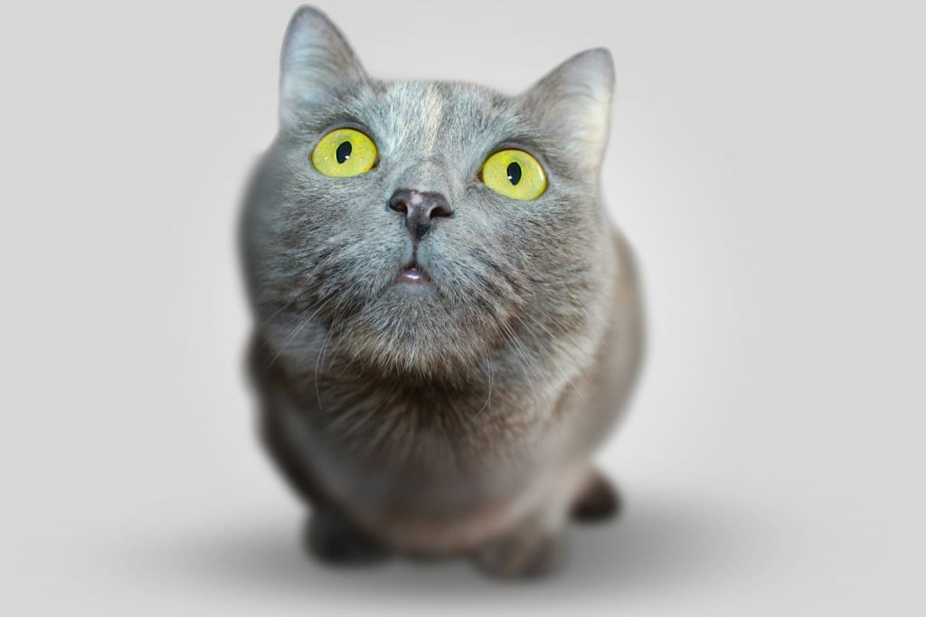 3882278531-cat-351926_1920-ERpW-1280x853-MM-100